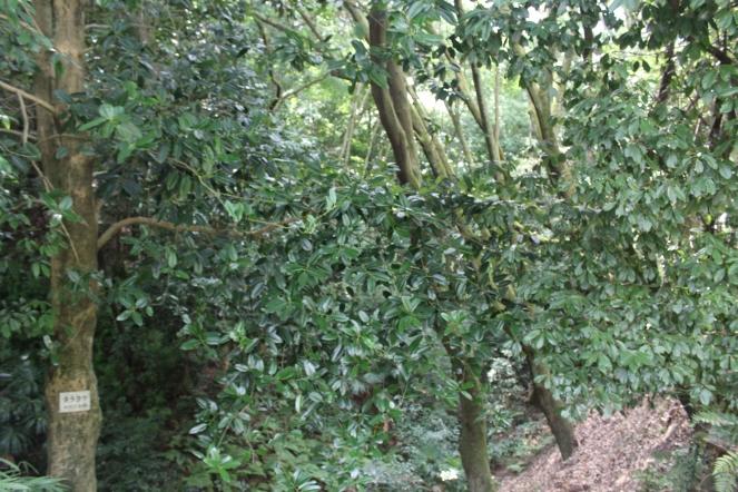 Hutan Tempat Persembunyian Ninja