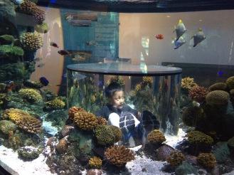 Aquarium Atlantis Legoland