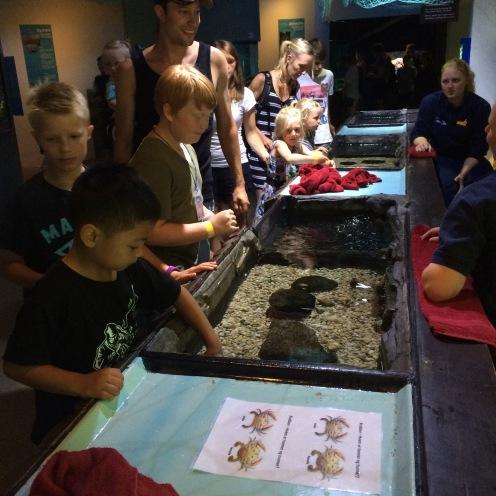 Belajar mengenal makhluk laut