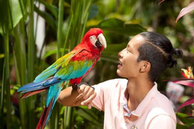 Bali Bird Park (sumber foto : www.balibirdpark.com)