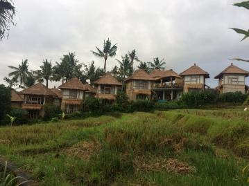 Deretan rumah bambu yang menghadap sawah
