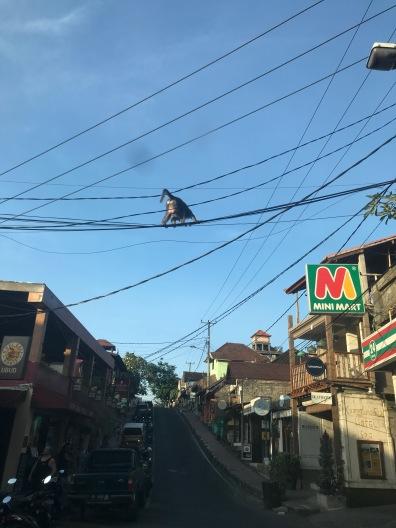 Gelayutan di kabel listrik