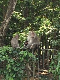 Ibu monyet dan bayinya