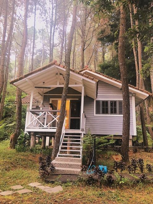 Pine Forest Villa